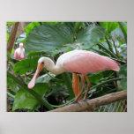 Poster rosado tropical rosado del pájaro