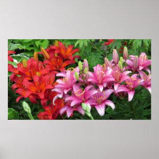 Poster rosado y rojo del lirio de la flor