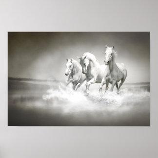 Poster salvaje de los caballos blancos