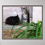 Poster salvaje de los gatitos