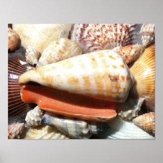 Poster - Seashellsf