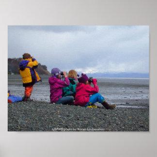 Poster / Shorebird Environmental Education