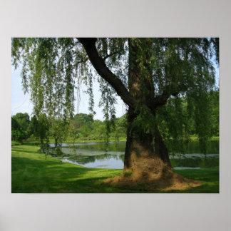 Poster solo del árbol