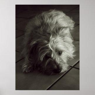Poster soñoliento del terrier de mojón