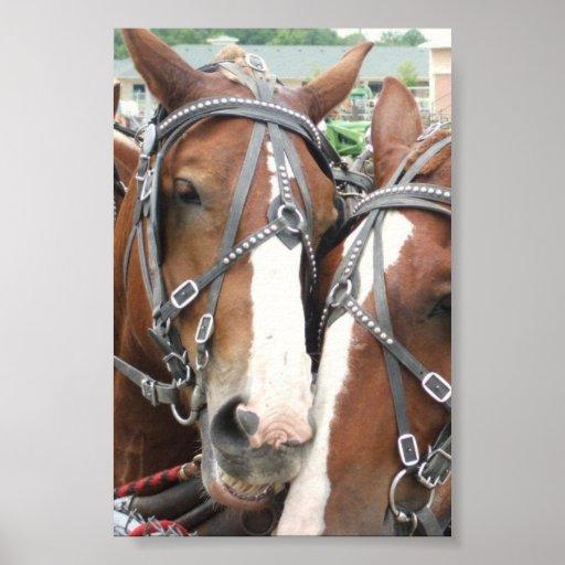 Poster sonriente del caballo