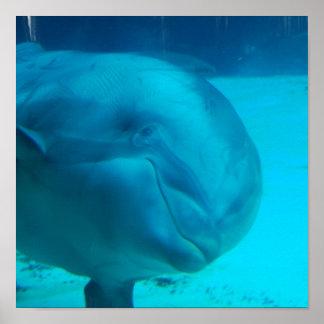 Poster sonriente del delfín