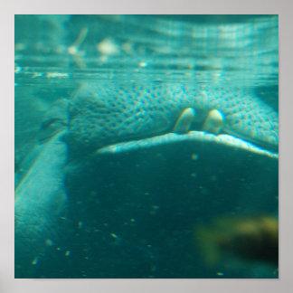 Poster sonriente del hipopótamo