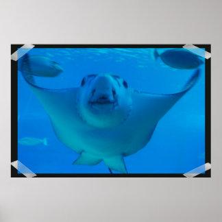 Poster subacuático de la pastinaca
