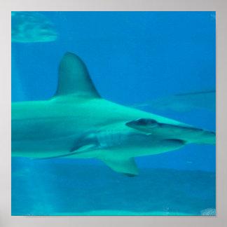 Poster subacuático del tiburón de Hammerhead