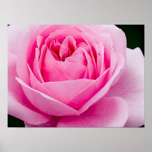 Poster subió del rosa en colores pastel