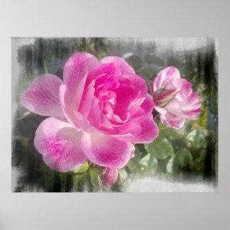 Poster subió jardín rosado ornamental