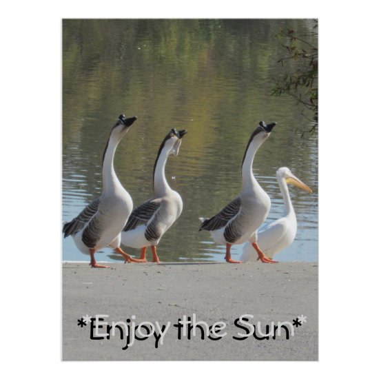 Poster - Sun Loving Geese