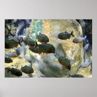 Poster suramericano de los pescados de la piraña