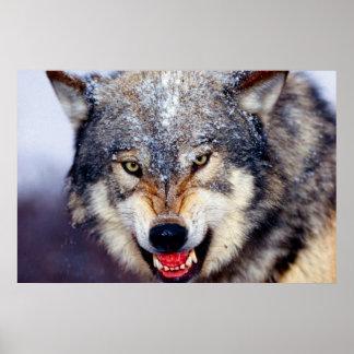 Poster temible del lobo