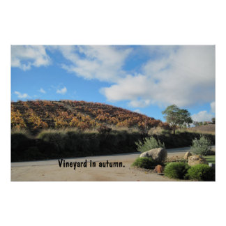 Poster: Templeton, CA, Vineyard in Autumn