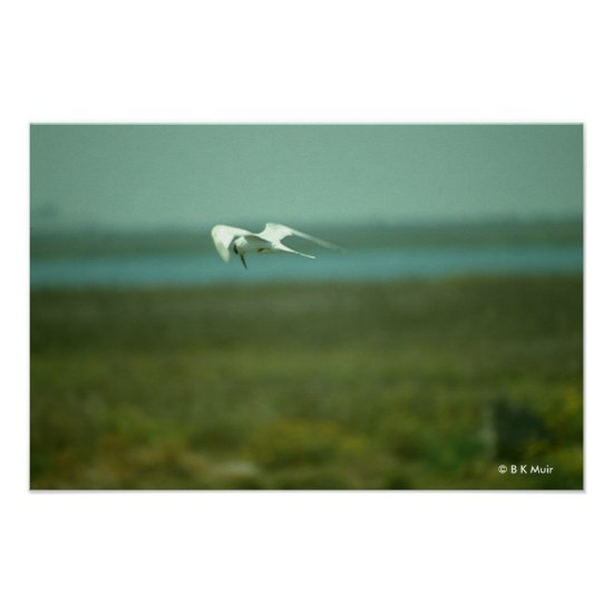 Poster - Tern in flight