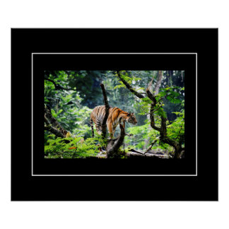 Poster-Tiger