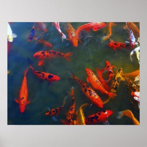 Poster tímido colorido de los pescados
