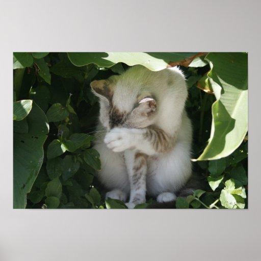 Poster tímido del gato