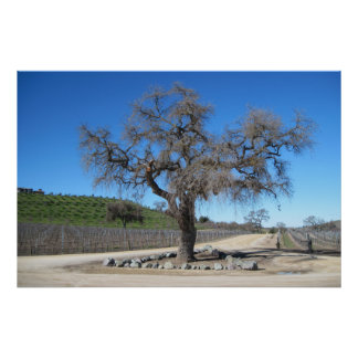 Poster: Tree Near Sculpterra Winery Parking Lot