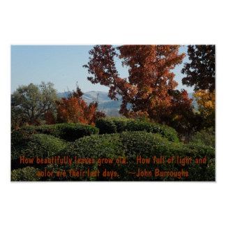 Poster:  Trees in Autumn Colors Poster