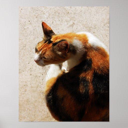 Poster tricolor del gato