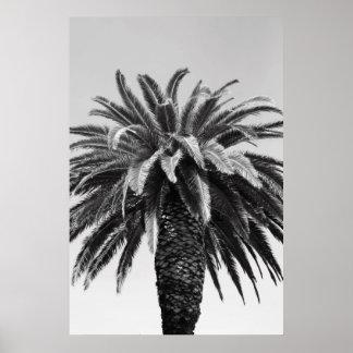Poster tropical de la palmera, impresión