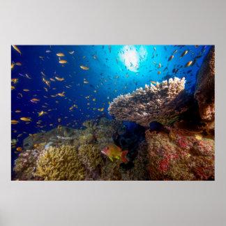 Poster tropical de los pescados del mar de coral