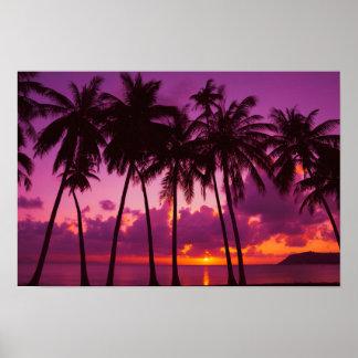 Poster tropical púrpura de la puesta del sol póster