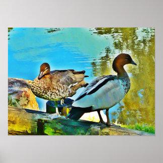 Poster Two Wild Ducks