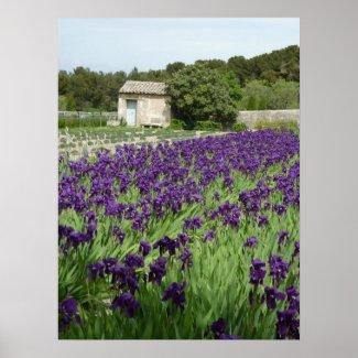 POSTER - Van Gogh Iris zazzle_print