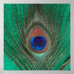 Poster verde de la pluma del pavo real