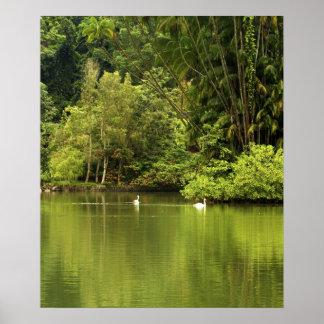 Poster verde del lago