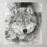 Poster vigilante del lobo de los ojos