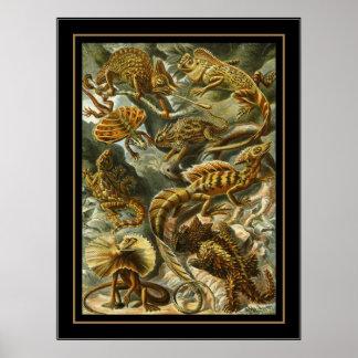 Poster Vintage Artist Ernst Haeckel Lacertilia