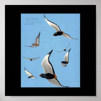 Poster-Vintage Chicago Art-Abyssinian Birds 12