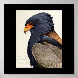 Poster-Vintage Chicago Art-Abyssinian Birds 17