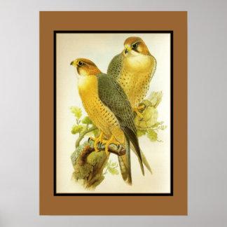 Poster Vintage Peregrine Falcon Birds