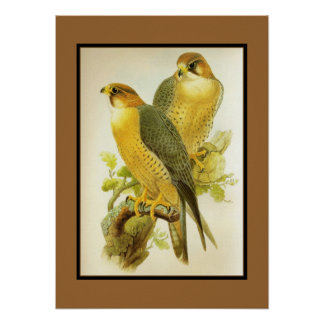 Poster Vintage Peregrine Falcon Birds Posters