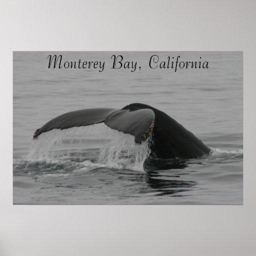 Poster, Whale Fluke, Monterey