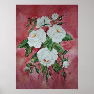 Poster White Roses