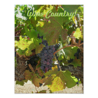 Poster - Wine Country