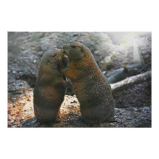 Poster  with cute marmot couple
