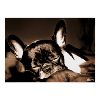 Poster with sleeping French Bulldogge