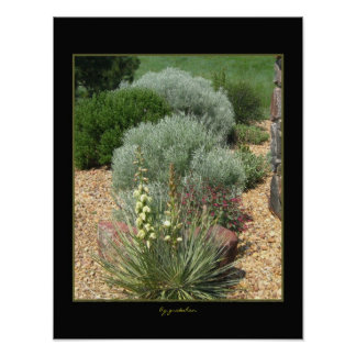 Poster-Yucca Blooms in Rock Garden Poster