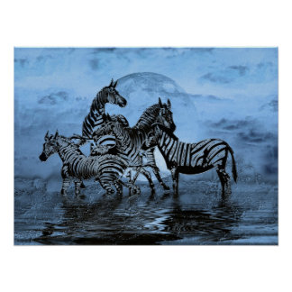 Poster Zebras5