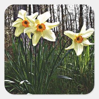 Posterized Daffodils Square Sticker