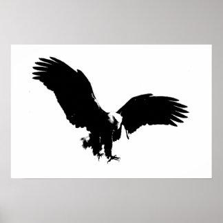Posters calvos de BW Eagles de la impresión del po