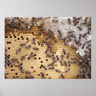 Posters De Abejas Honeycomb