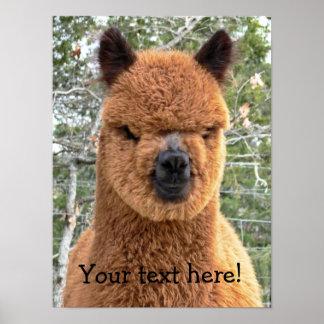 Posters de la alpaca